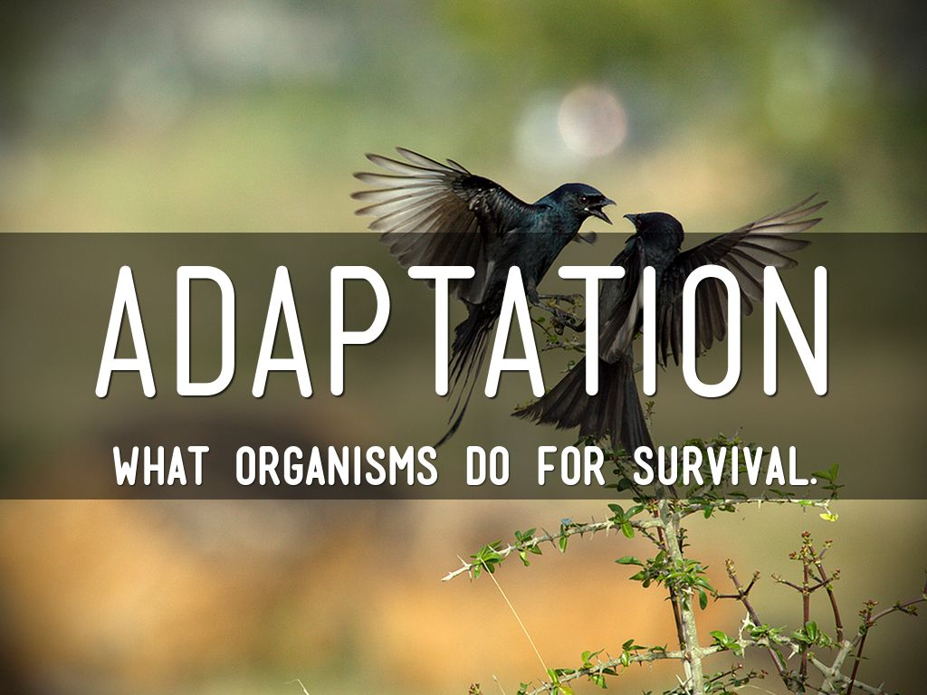 external adaptation and survival