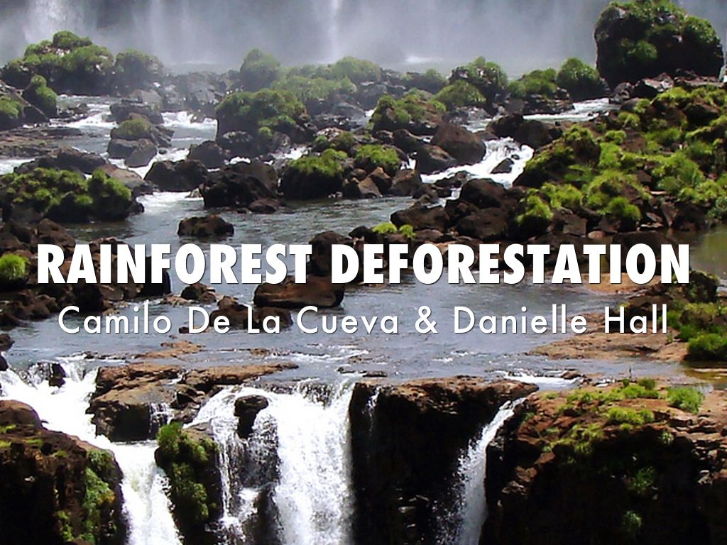 rainforest deforestation speech Deforestation facts for kids  deforestation is when forests are converted for other purposes by  a patch of rainforest measuring 4 square miles can.