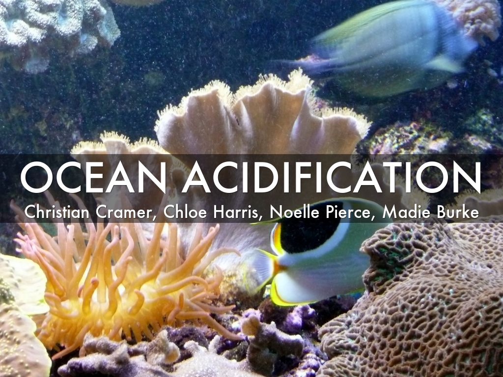 ocean acidification Ocean acidification :: apr 2008 the oceans feel impacts from acid rain.