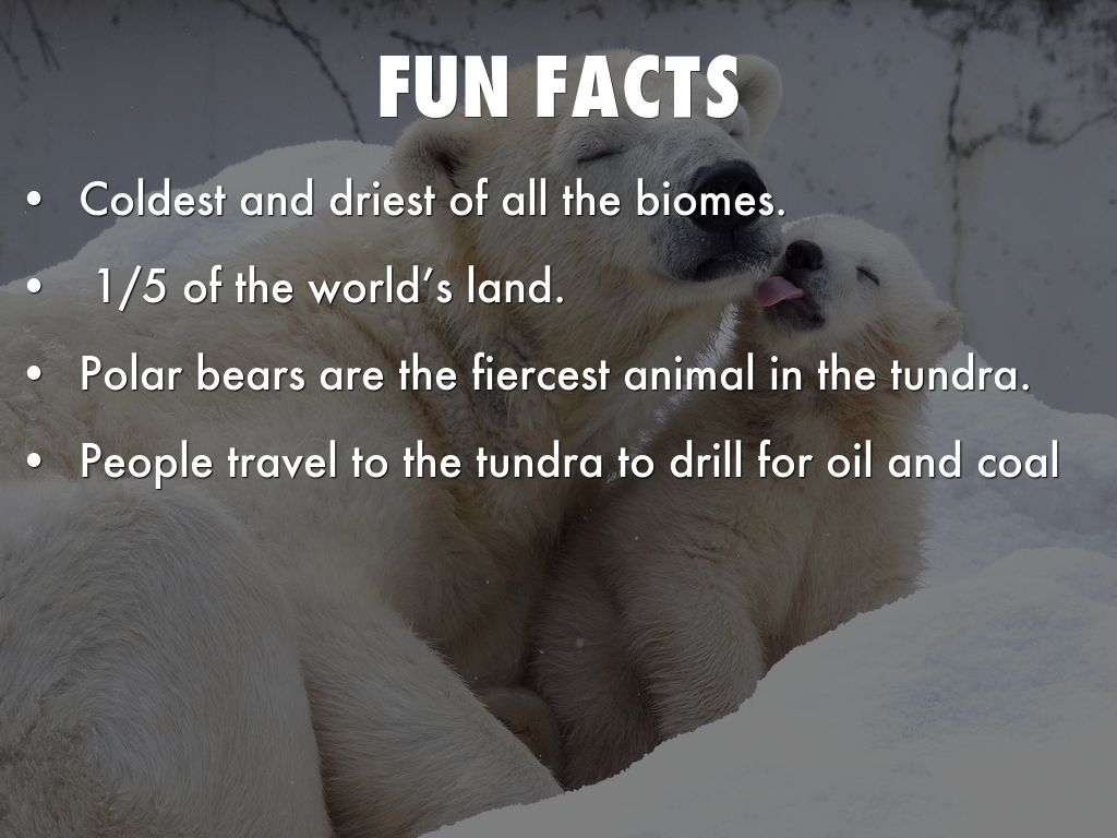 facts about the tundra
