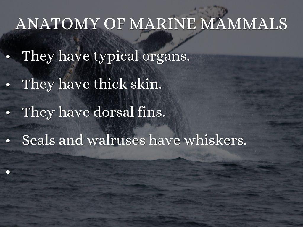 Marine Mammals by Valentina Tiemann