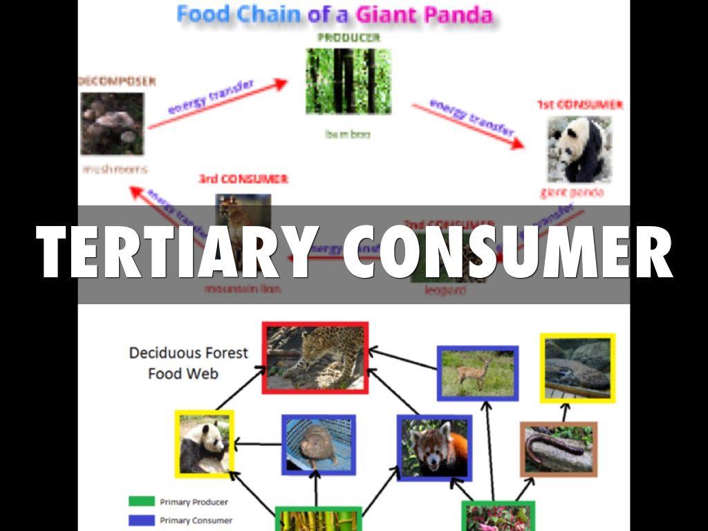 Amazoncom BearVault BV500 Bear Resistant Food Canister