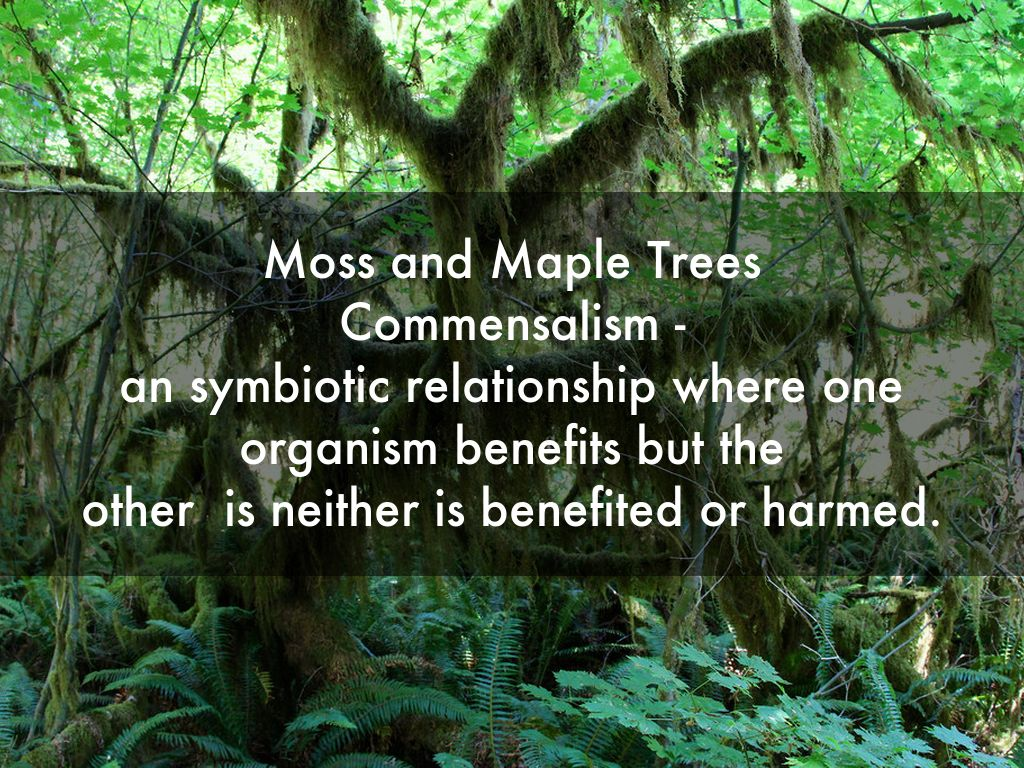 symbiotic relationship trees and squawroot