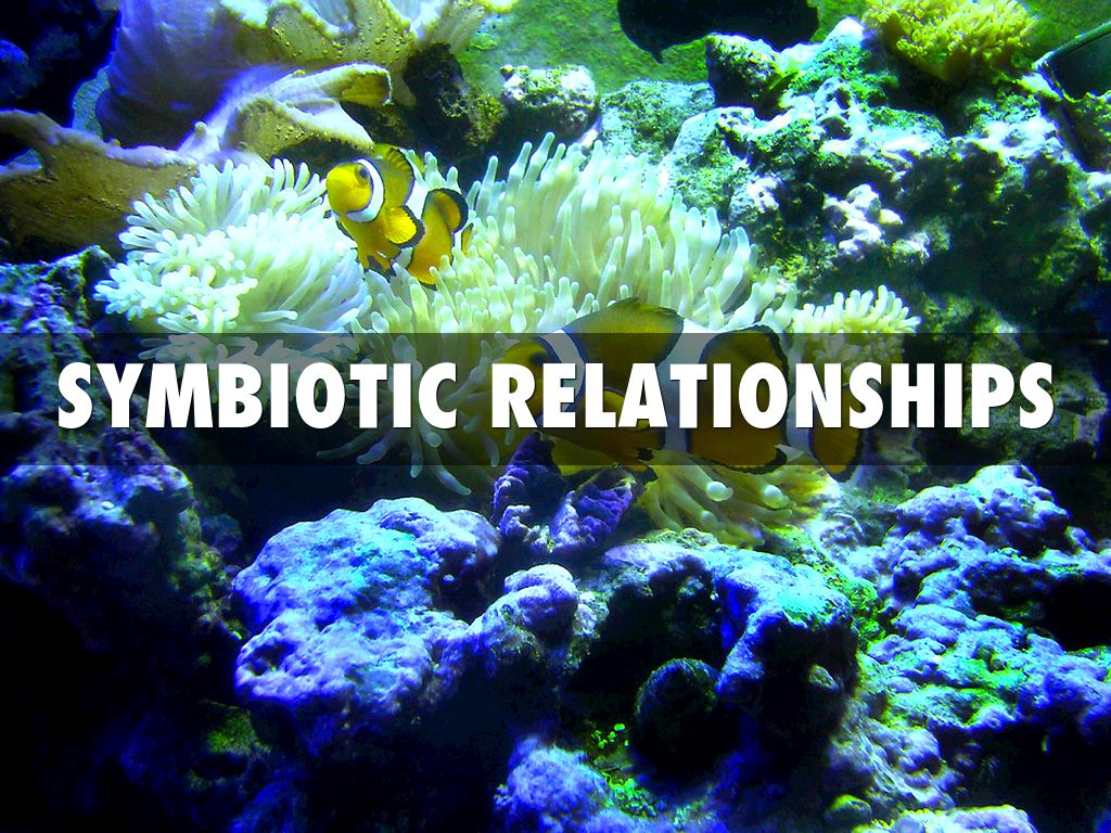 man of war fish and jellyfish commensalism relationship