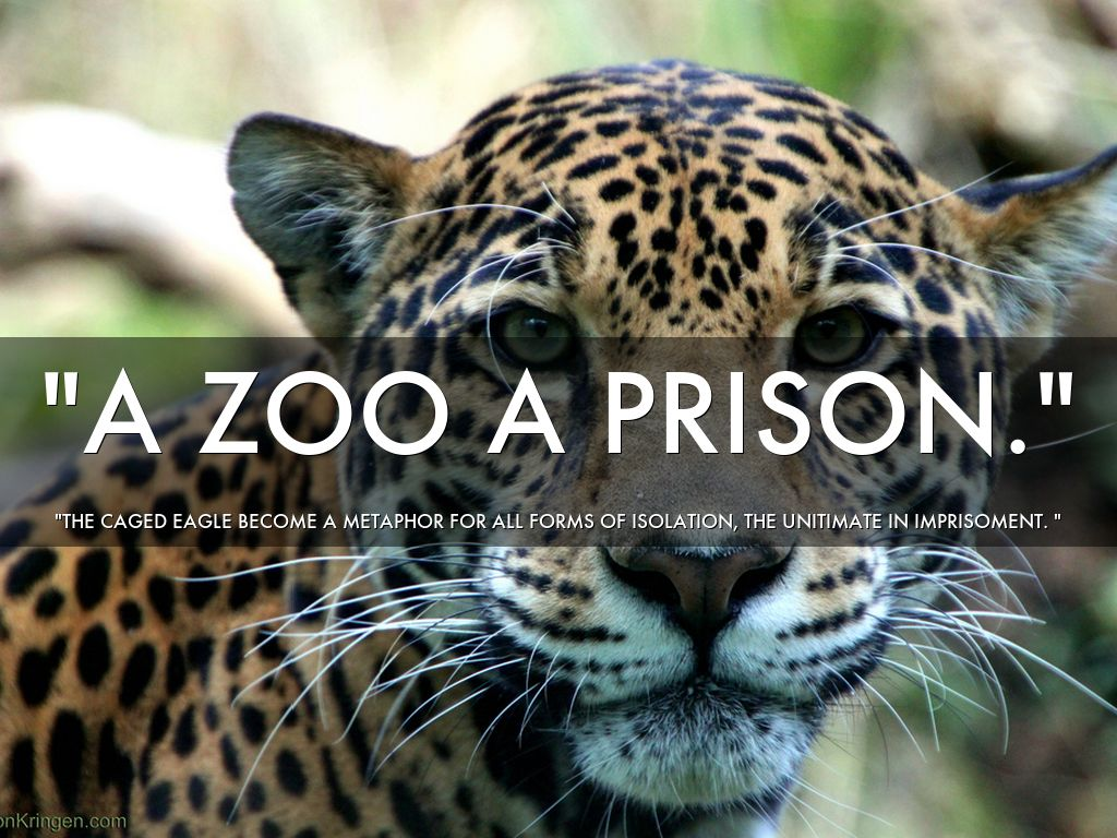 zoo or prison Sanctuaries or showbiz: three us zoos were criticized for secretly flying 18 elephants out of africa and zoo keepers in calgary accidentally killed an otter.