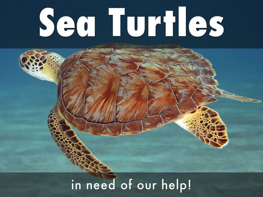 Sea Turtles Need Our Help