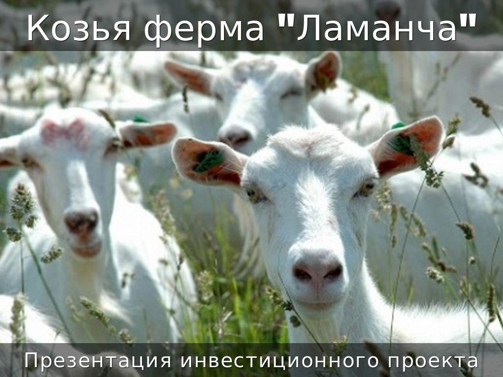 "Козья  ""Ламанча""4-1"