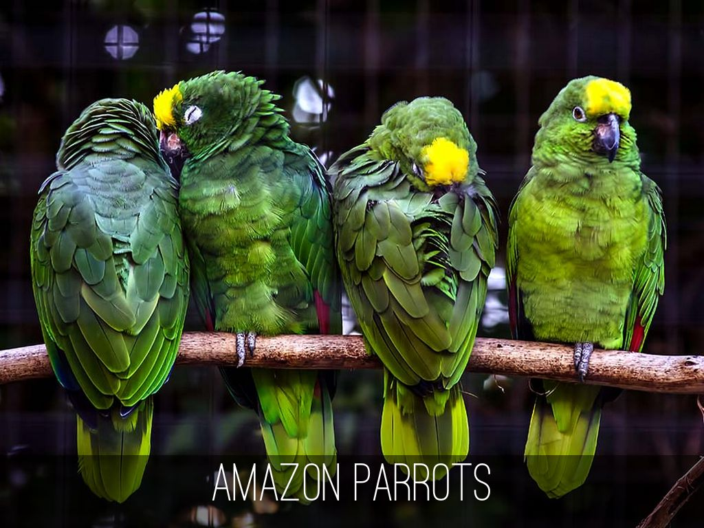 amazon rainforest animals by daniel moore