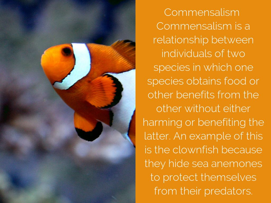 clownfish and sea anemones form what sort of relationship exists