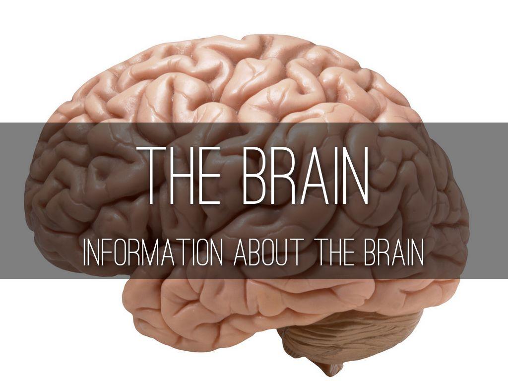 Th Brain Nikki Le By Nikki Le