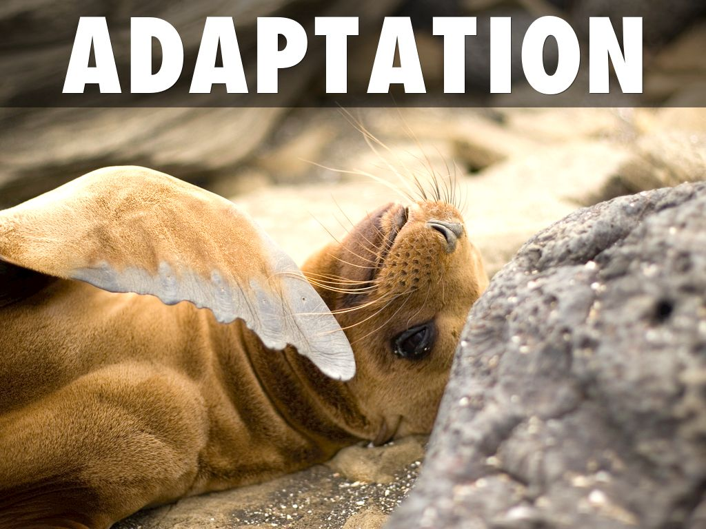Galapagos Fur Seal by joe.sear - photo#46