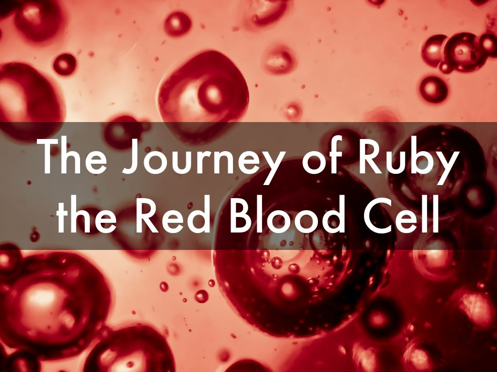 the journey of ruby the red blood cell by secretariat88