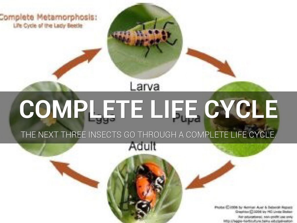 Incomplete Life Cycle by Carly Williams
