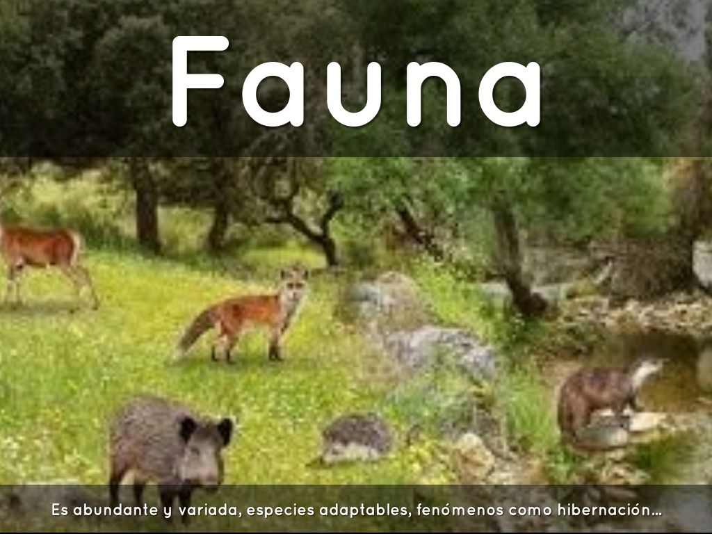 Fauna En El Bosque De Coniferas Imagui