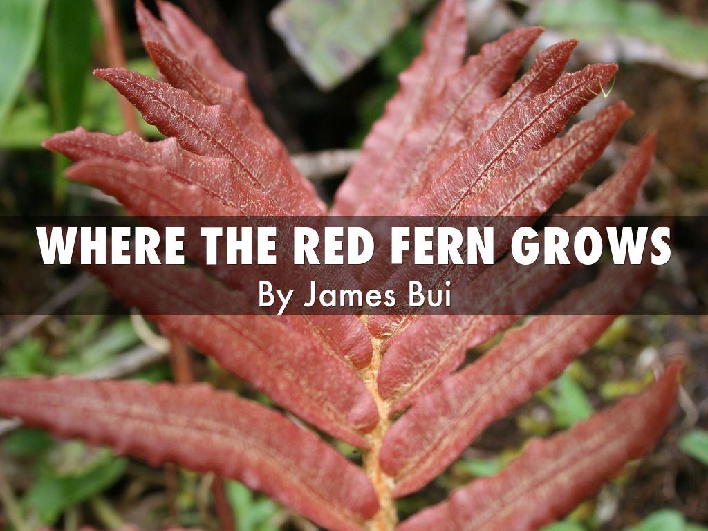 an analysis of the story where the red fern grows Read chapter 2 from the story where the red fern grows by benjamingarcia2 (benjamin garcia) with 5,039 readsi suppose there's a time in practically every youn.