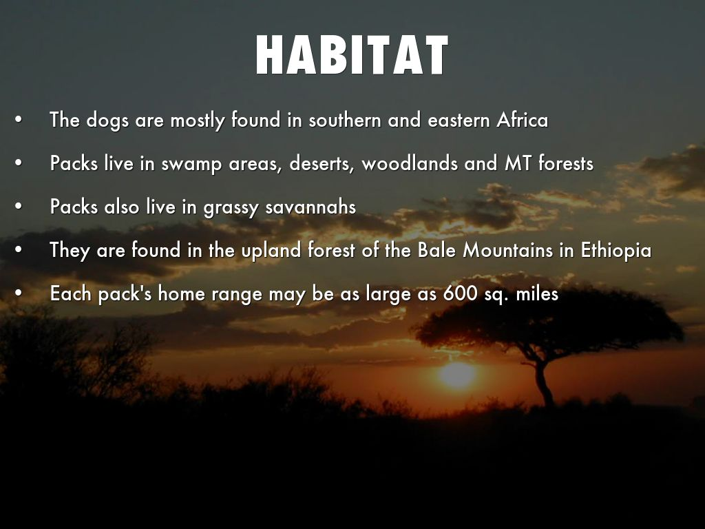 Dog Habitat And Food