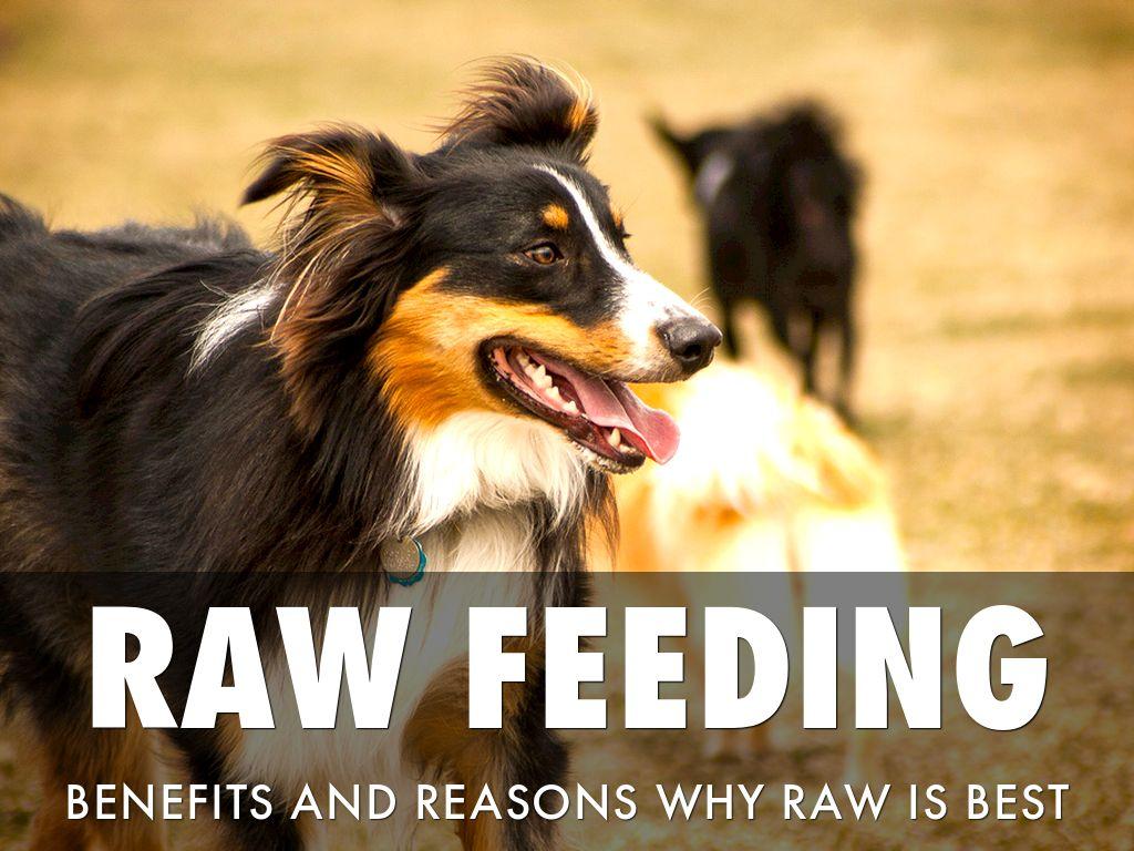 Raw Feeding Benefits