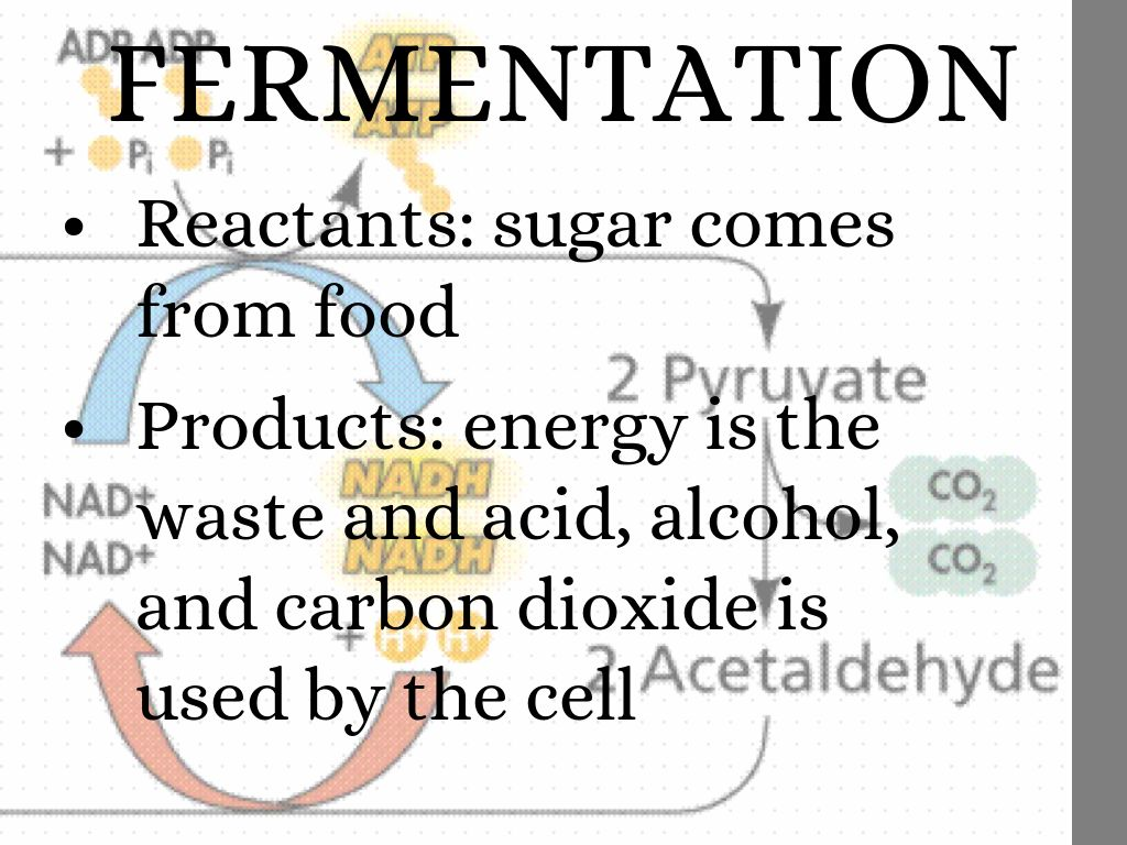 Photosynthesis Cellular Respiration And Fermentation
