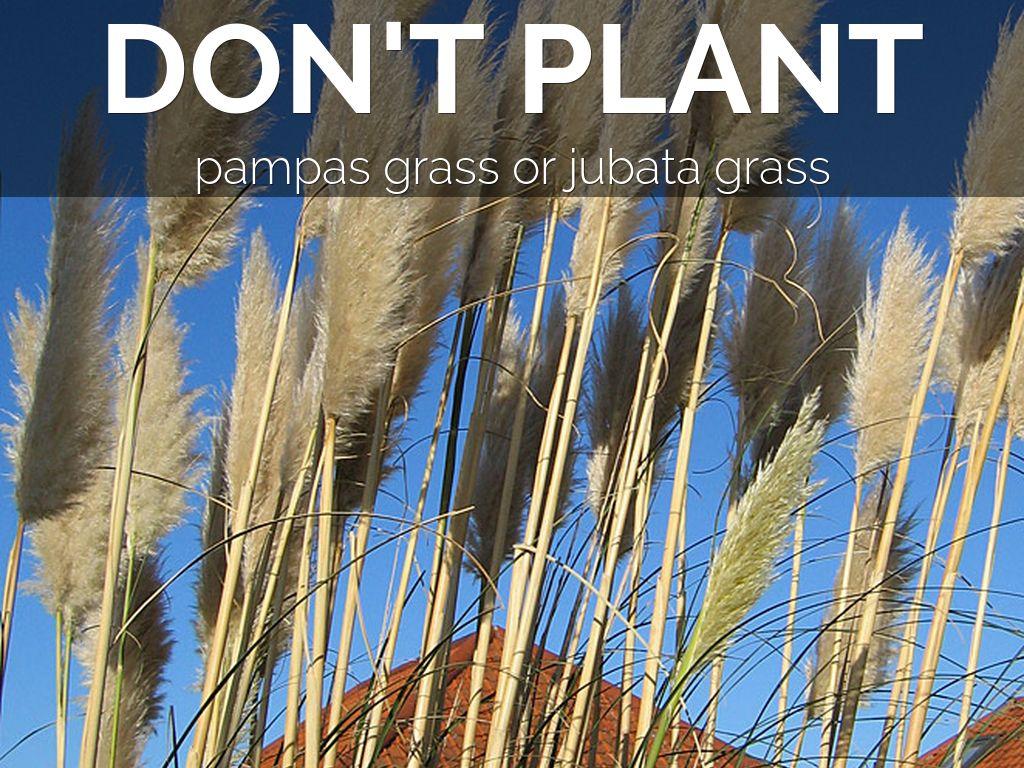 Don T Plant A Pest By Judi