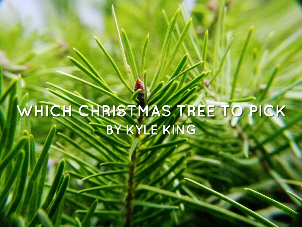 Which Christmas Tree To Pick 😎 by Kyle King