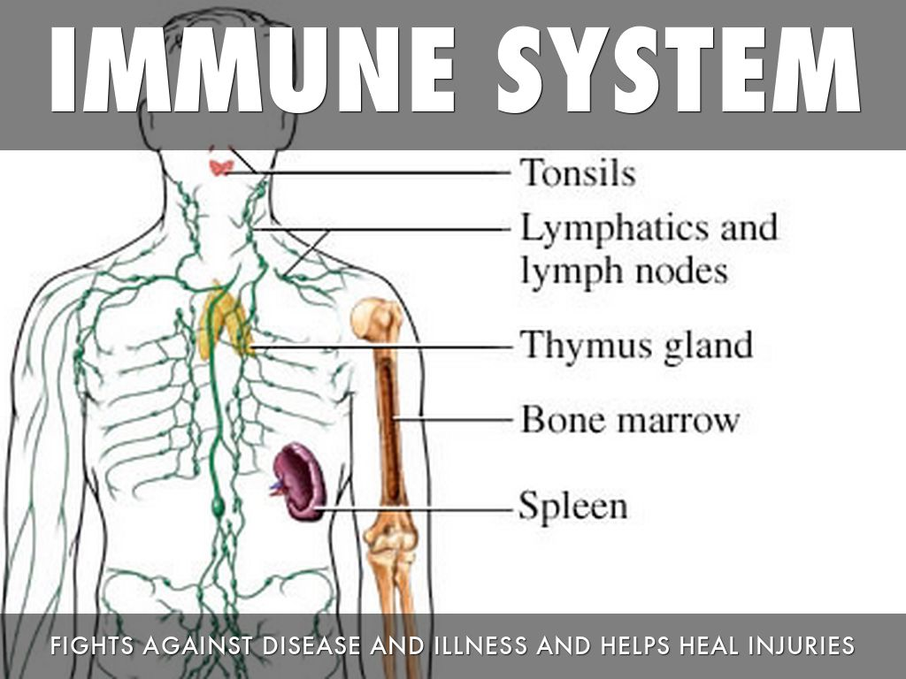 an analysis of the human immune system in medical research Measuring the immune system: a comprehensive approach for the analysis of immune functions in humans the immune system is.