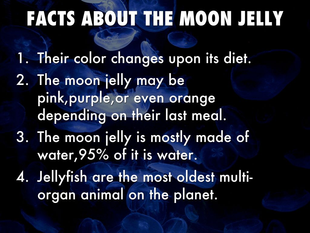 jellyfish are made of 95 water pdf