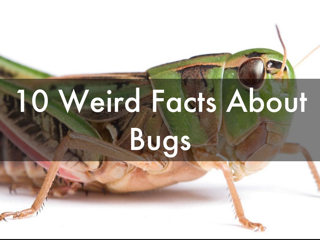 10 Weird Facts About Bugs