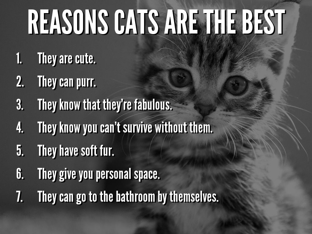 why cats are awesome essay The first reason why dogs make the best pets is that dogs don't care what they eat and cats are very picky eaters dogs are happy eating the same thing every day.
