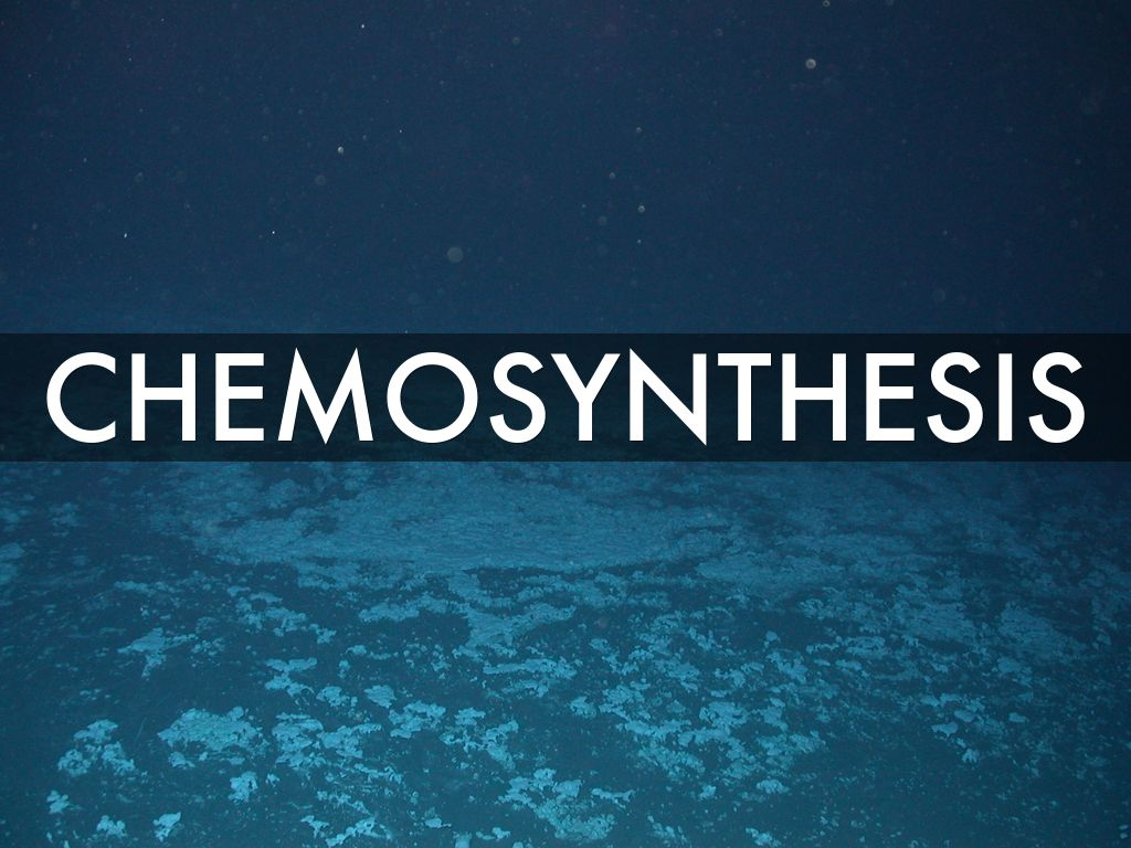 chemosynthesis by cdann15