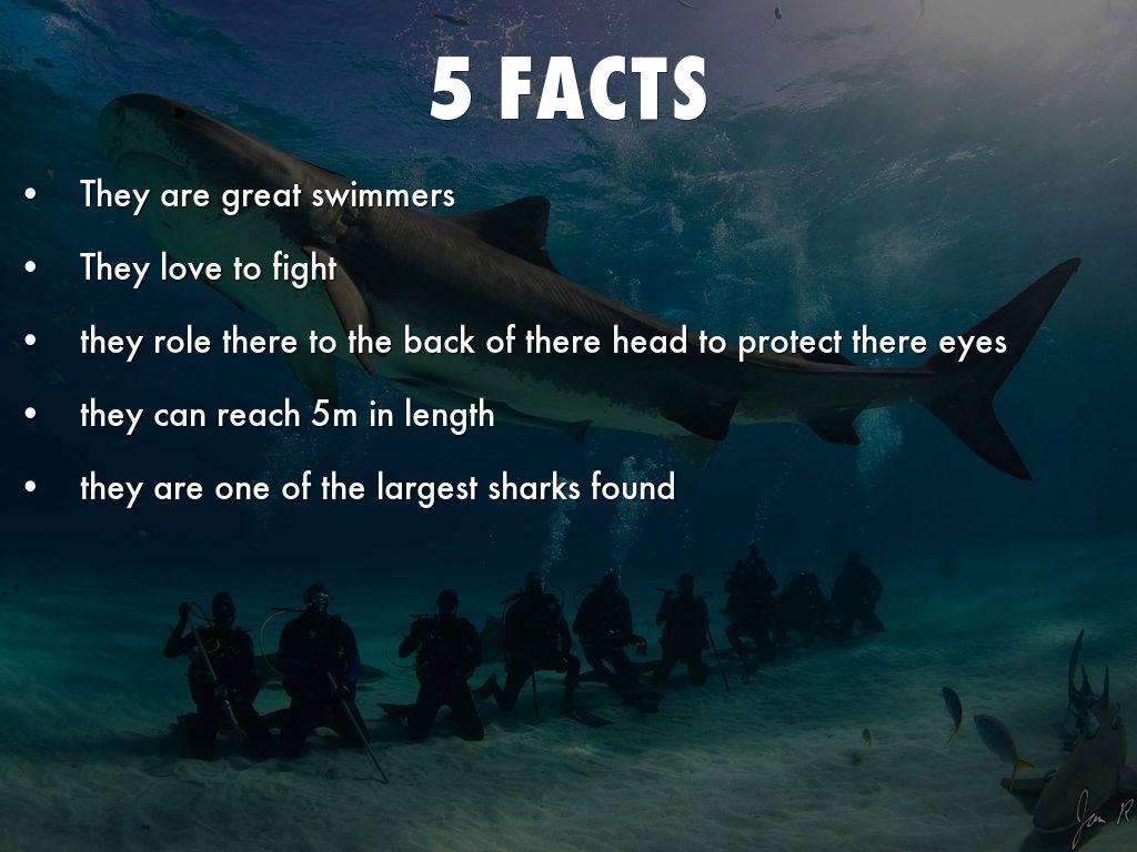 Sand tiger shark information amp pictures of sand tiger sharks - 5 Facts