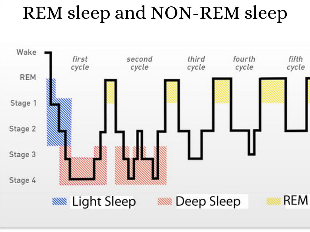 stages of sleep Throughout wakefulness and sleep, the electrical activity of the brain changes and creates different types of brain waves, characterizing the various stages of sleep.