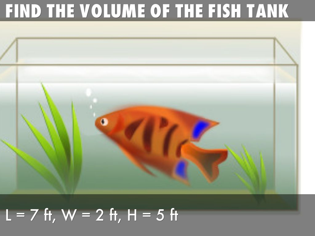 Volume of a aquarium real life problems by calvin tang for Fish tank size calculator