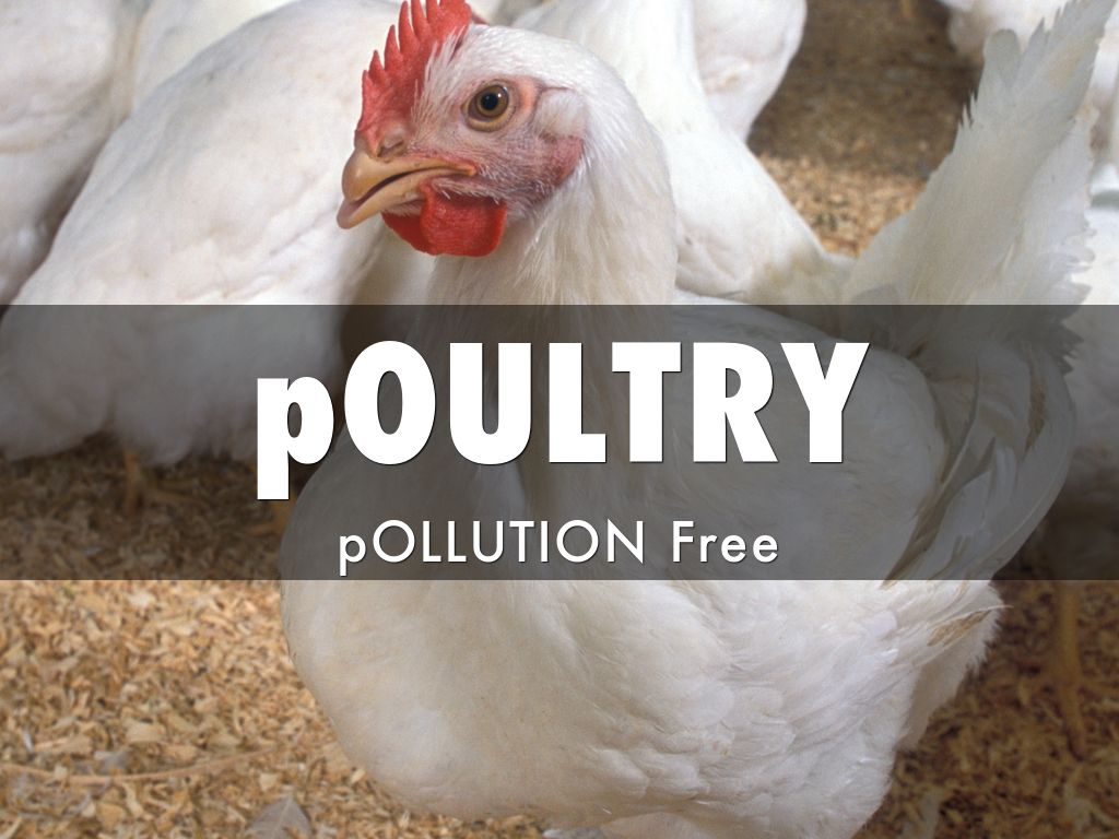 pOULTRY pOLLUTION Free