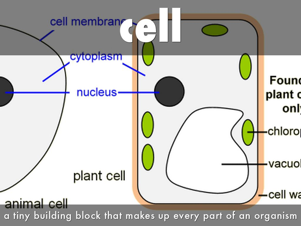 difference between a cell and frame