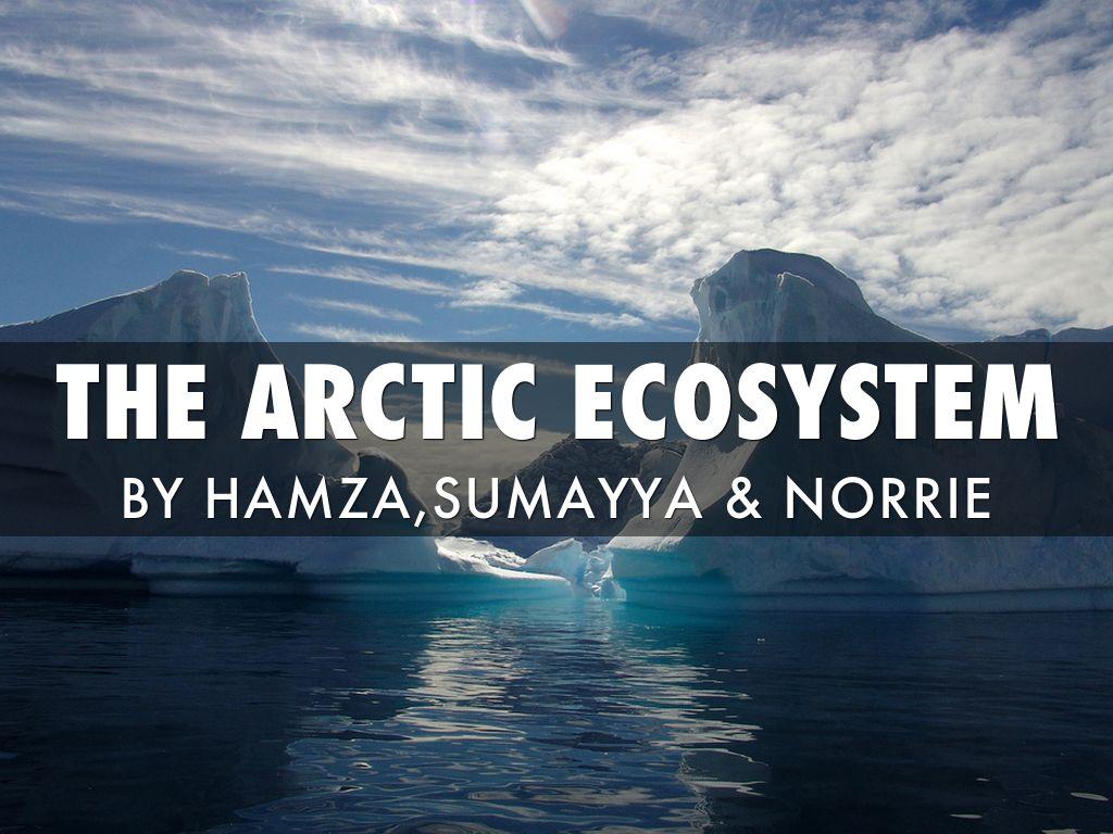 Antartica/Arctic