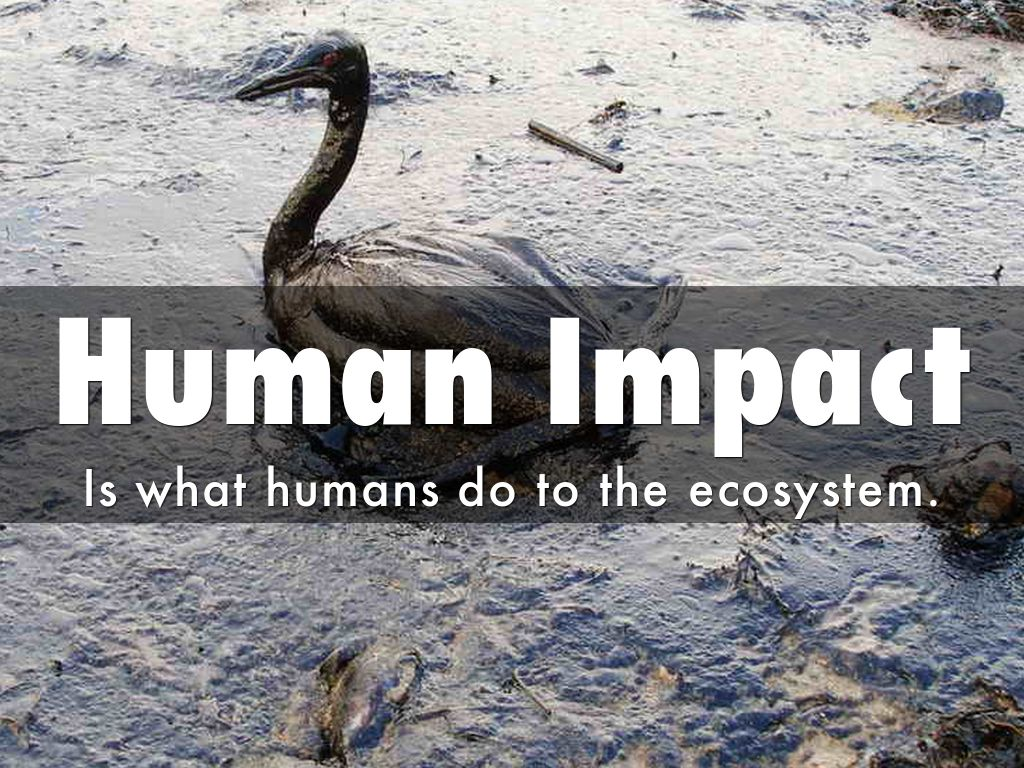 human impact on the ecosystem