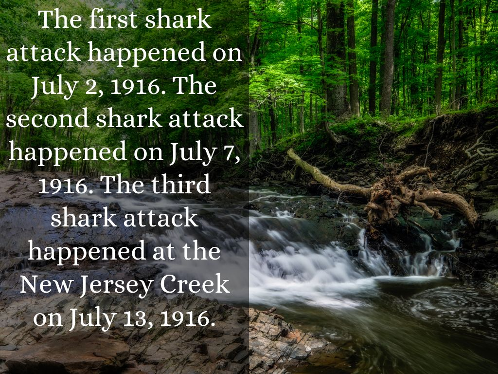 shark attack of 1916 Based on true events it's the summer of 1916 and the jersey shore is being terrorized by a great white shark can 10-year-old chet and his friends survive a swim in the local creekin the summer of 1916, ten year-old chet roscow is captivated by the local news: a great white shark has been.