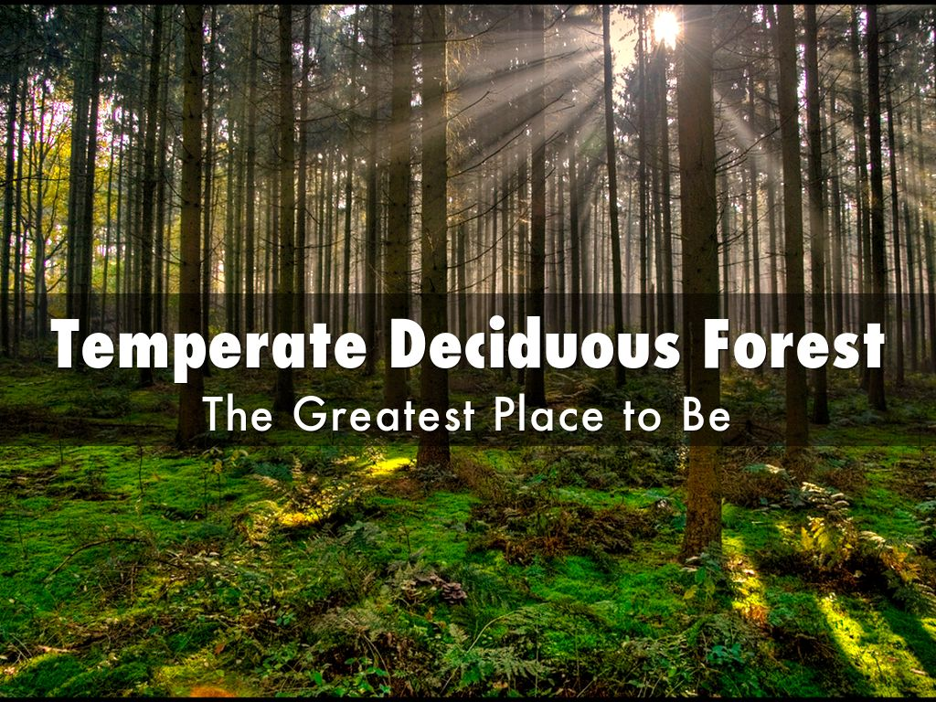 what environmental problems are there in the temperate deciduous forest Within it adapting to its environment] there are also many temperate deciduous biomes in asia problem in the deciduous forest biome is the.
