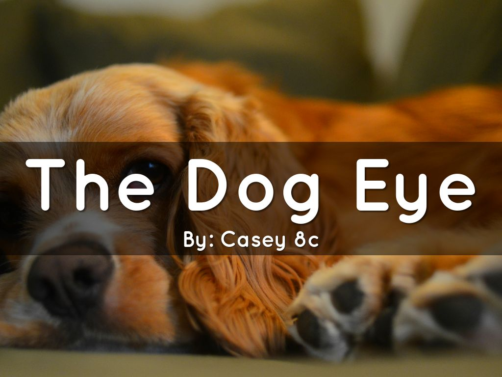 The Dog Eye