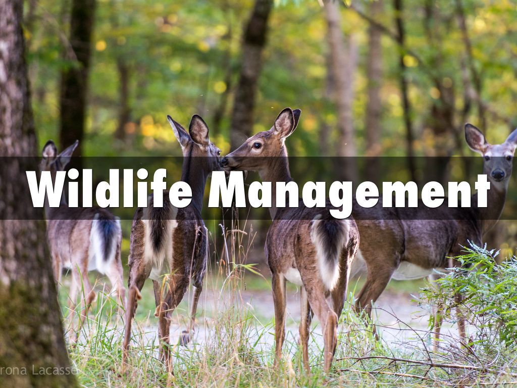 Haiku deck gallery art and design presentations and templates for Wildlife management plan template