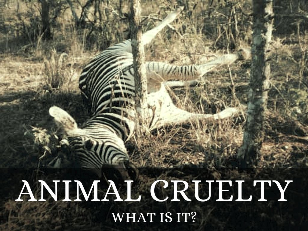 animal cruelty 2 Cruelty to animals, also called animal abuse, animal neglect or animal cruelty, is the infliction by omission (animal neglect) or by commission by humans of suffering or harm upon any non-human.