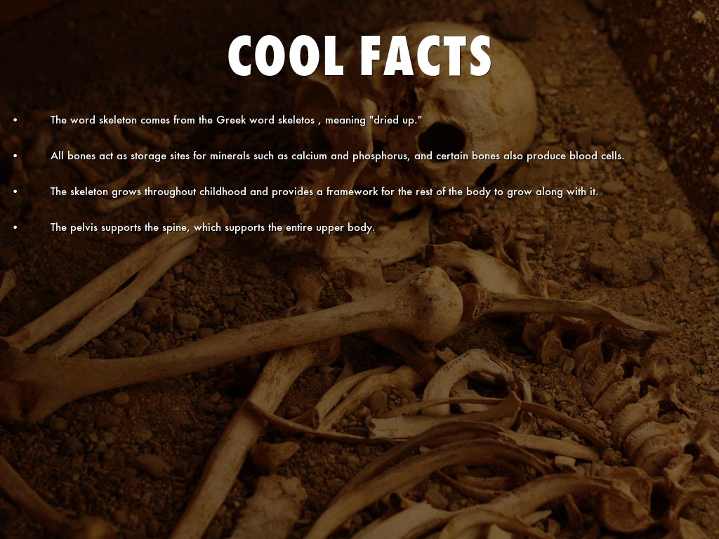 Skeletal System Brandon Golden By Brandon Golden