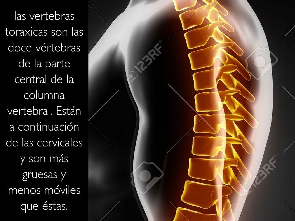 La columna vertebral by heyanaahi