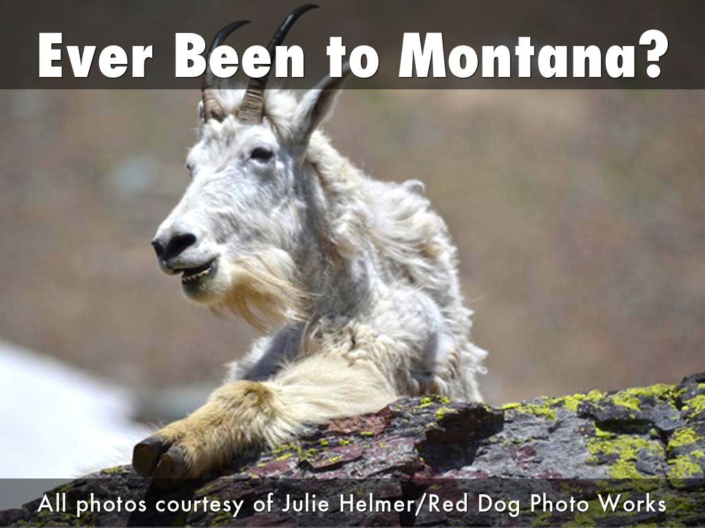 Ever Been to Montana?