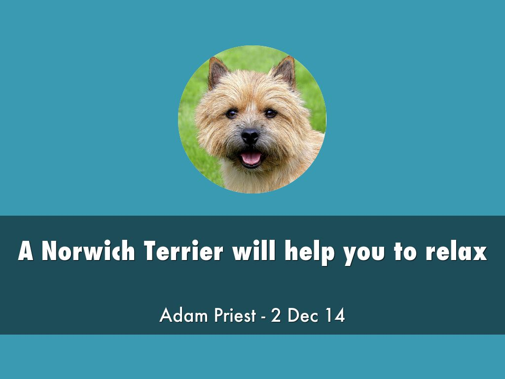How a Norwich Terrier can help you to relax