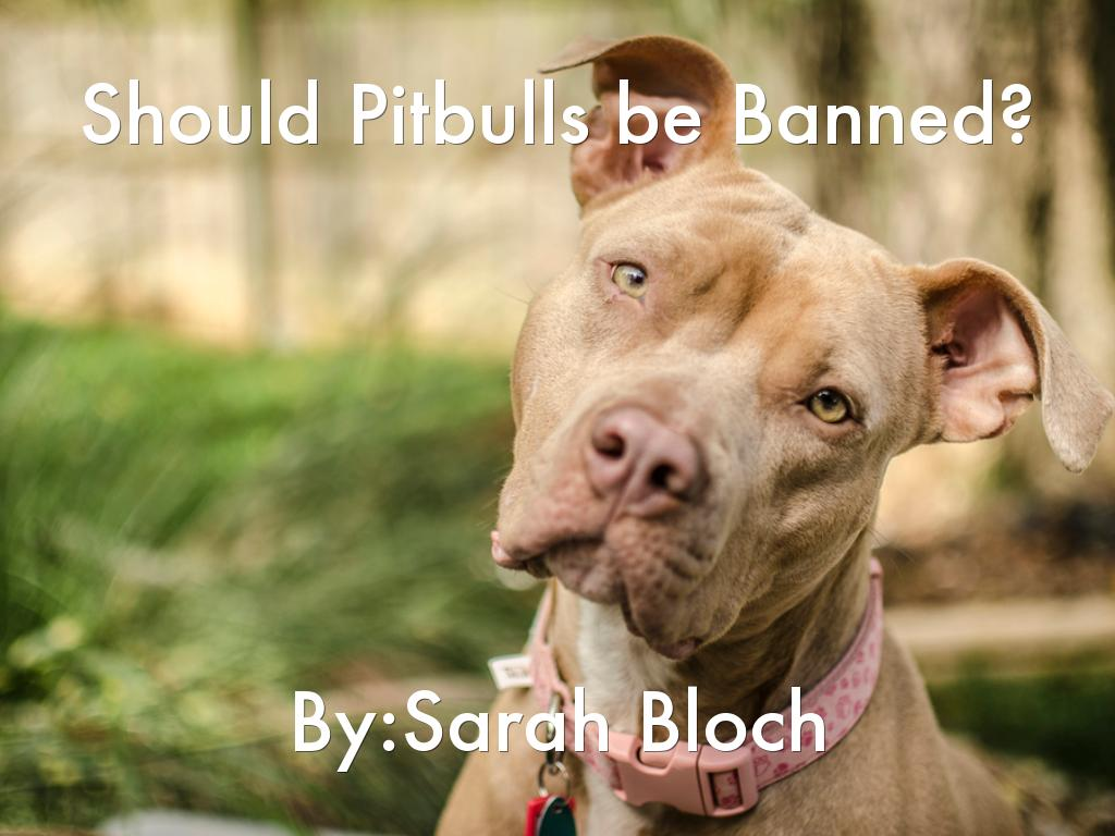 pit bull being banned Critics of the new rules say the dogs are being unfairly montreal's pit bull ban is certain breeds of dogs have also been banned in the.