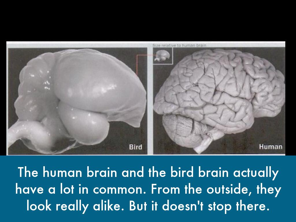 Bird Brain: Why Are Parrots So Smart? by Brock Malone
