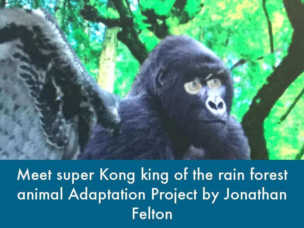 Animal Adaptation Project By Jonathan Felton