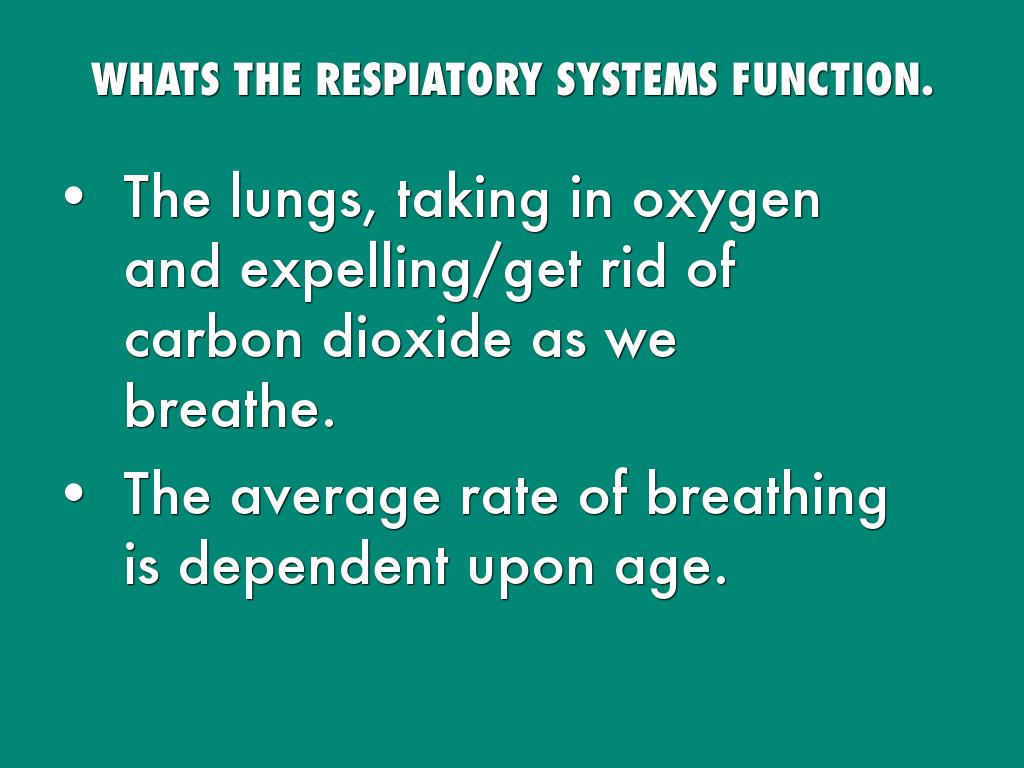 Respiratory System By Madysen Roberts Function And Diagrams Breathing Oxygen Whats The Respiatory Systems Lungs Taking In