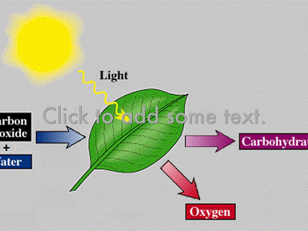 chemosynthesis in When discussing chemosynthesis vs photosynthesis, one important factor that  distinguishes these two processes is the use of sunlight.